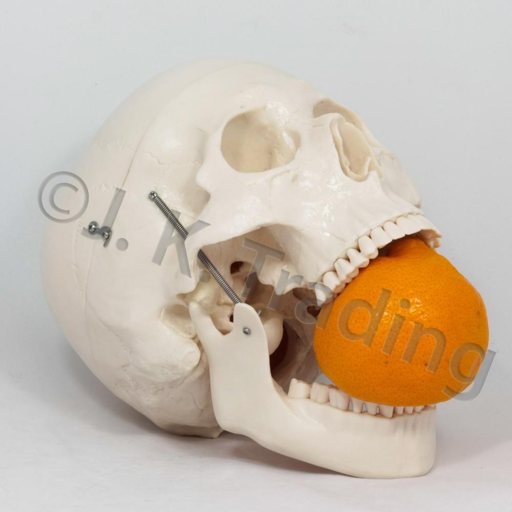 deluxe-skull-7843-1000