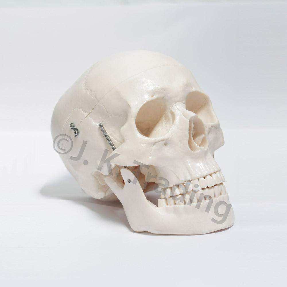 deluxe-skull-9535-1000