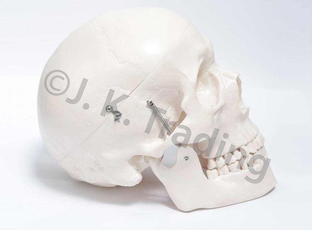 deluxe-skull-9560-1000