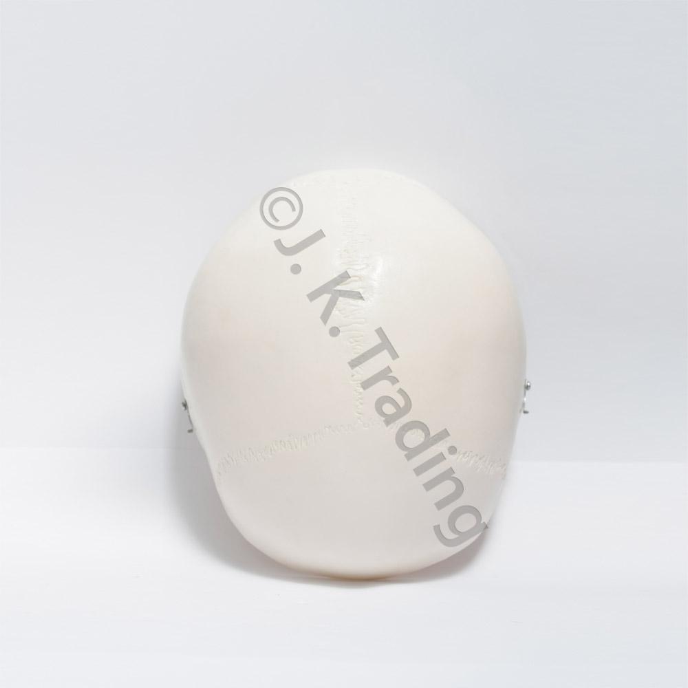 deluxe-skull-9590-1000