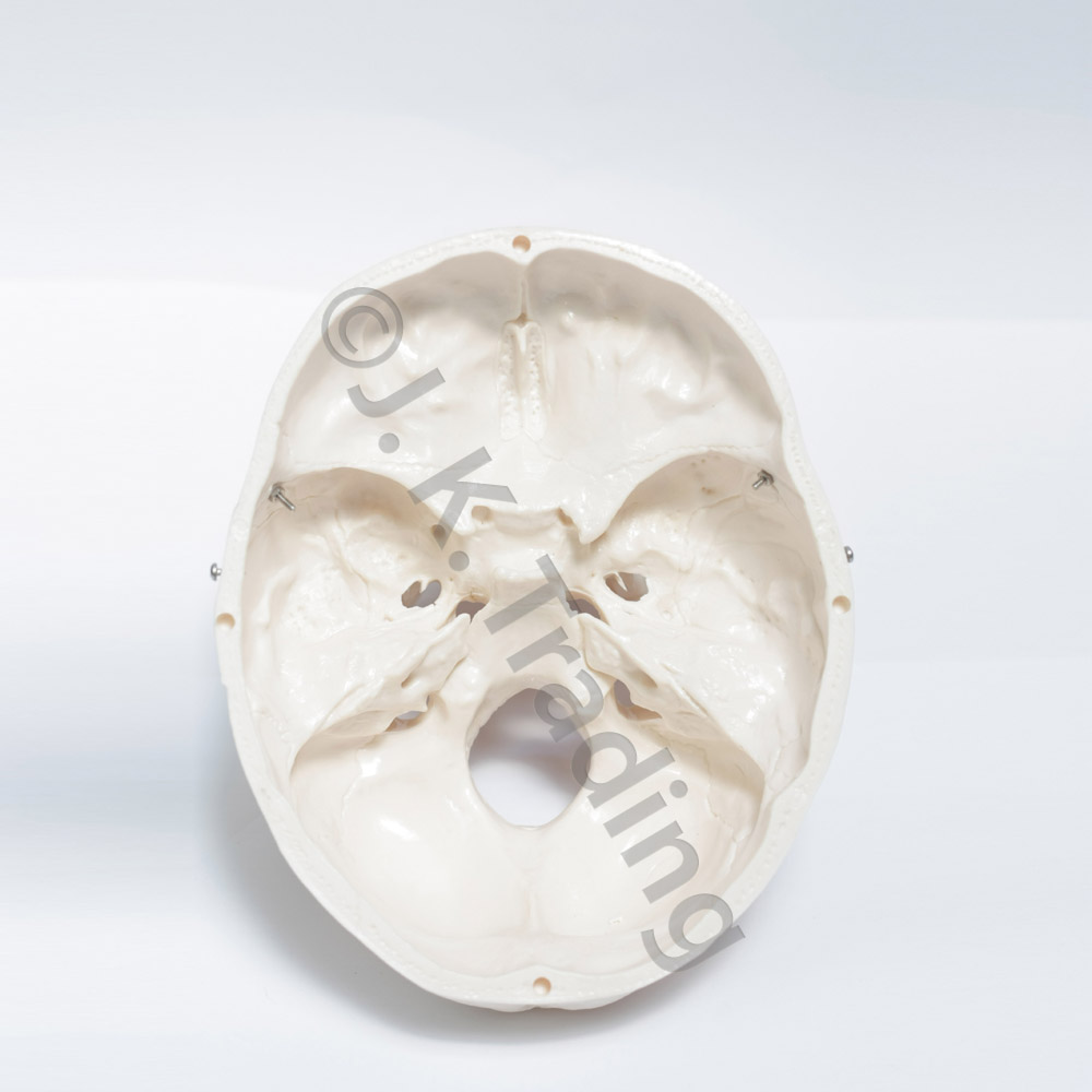 deluxe-skull-9624-1000