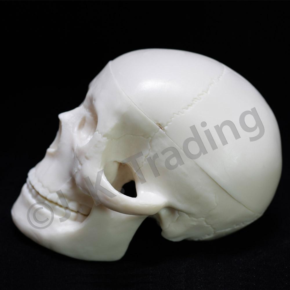 skull-mini-9737-1000