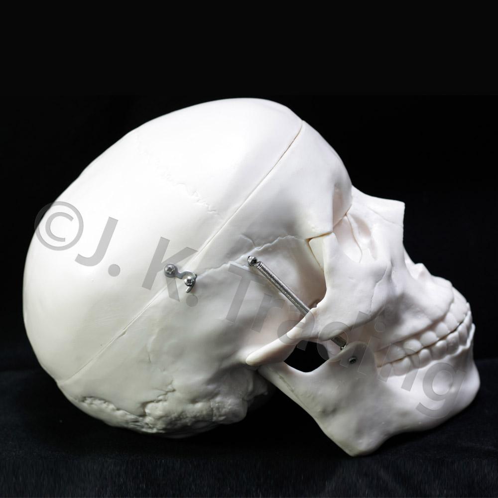 skull-std-9661-1000