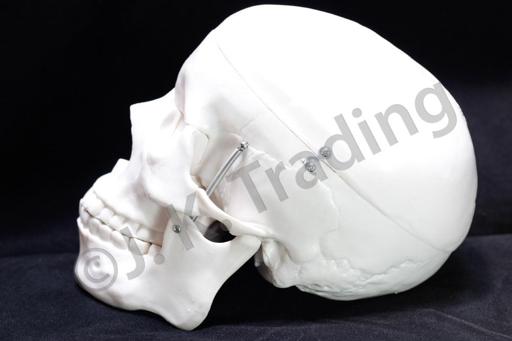 skull-std-9669-1000