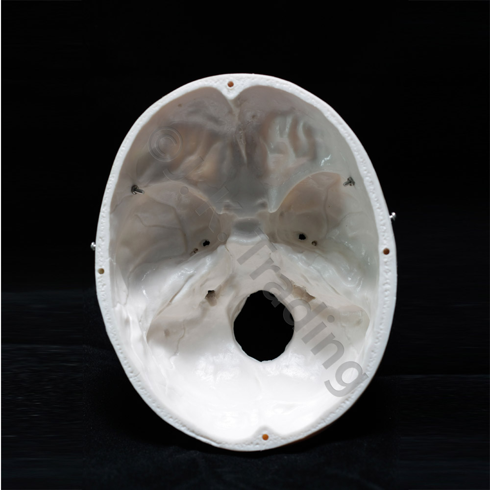 skull-std-9687-1000