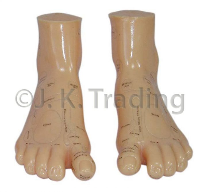 Foot Anatomy Model with Massage Areas Marked in Detail